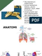 Etiologi Anatomi Pf