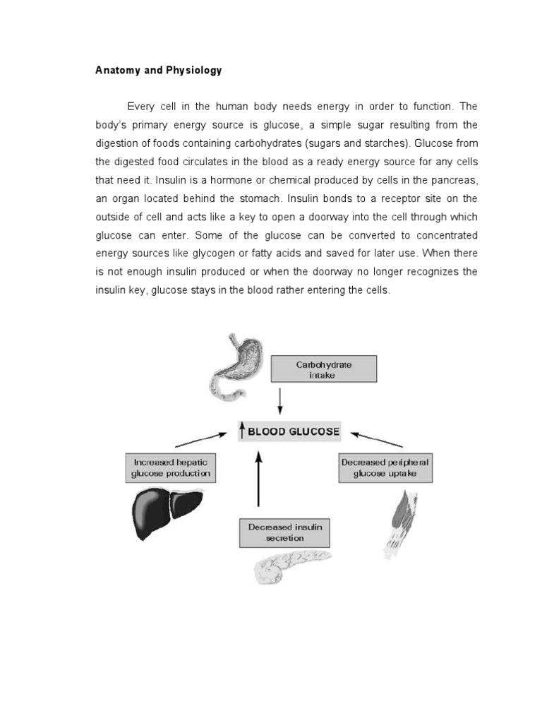 Anatomy and Physiology | Pancreas | Human Digestive System