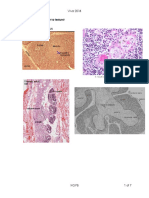 Thymus Spleen Tongue Teeth Salivary Glands Histo Pracs nej.pdf