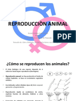 Reproducciòn Animal