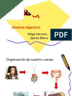 Sistema Digestivo Quinto