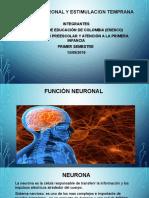 Función Neuronal y Estimulación Temprana.
