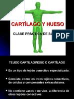 Hueso y Cartilago