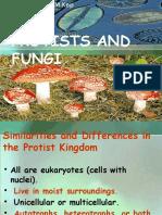 Protists and Fungi Fix