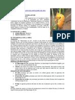 Analisis Lterario Del Hipocampo de Oro