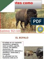 Creyentes Como Bufalos