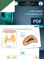 CORTICOIDES SUPRARRENALES.pptx