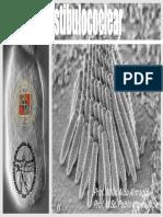 vestibulococlear PUCV