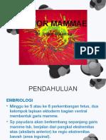 Kul 1. Tumor-Mammae