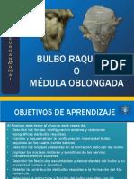 01 Tallo Cerebral Configuracion Interna BULBO RAQUIDEO