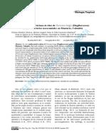 00-MENDEZ-Actividad Antibacteriana in Vitro de Curcuma Longa