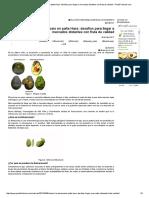 Control de la antracnosis en palta Hass_ desafíos para llegar a mercados distantes con fruta de calidad - PortalFruticola.pdf