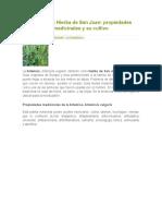 Artemisa o Hierba de San Juan
