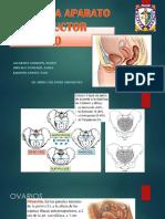 Anatomia Histologia y Fisiologia Arf