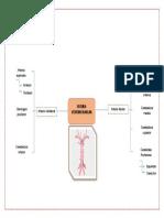 Sistema Vertebrobasilar
