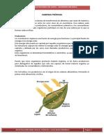 ciclos-biogequimicos