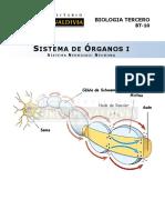 Guía sistema nervioso Neurona.pdf