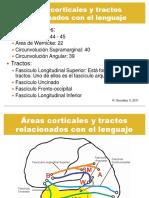 Áreas corticales y tractos relacionados con el lenguaje 120911.pdf