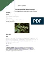 plantas uso alimenticio
