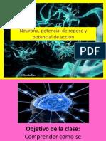 PDF Neurona y Potencial de acción