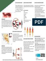 5  Ficha Ébola del artículo.pdf