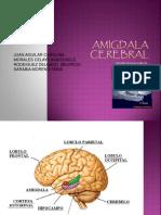 expo amigdala