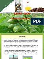 cultivodesachainchi-121016222645-phpapp02