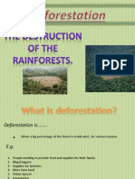 Deforestation Power Point Presentation Fiona