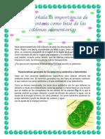 Señala La Importancia de La Fotosíntesis Como Base de Las Cadenas Alimentarias