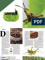 chapulines.pdf
