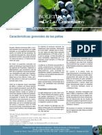 boletin de caracteristicas de palta.pdf