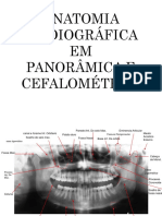 Anatomia Em Panoramica