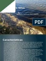 Presa de Silva