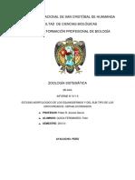 8 y 9 Informes Zoologia Sistematica
