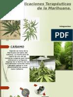 Aplicaciones Terapéuticas de La Marihuana