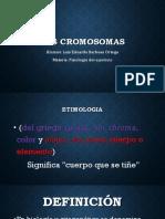 Los Cromosomas