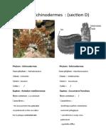 TP-les echinoderme (H.M).docx