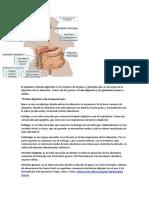 El aparato o sistema digestivo es el conjunto de órganos y glándulas que se encargan de la digestión de los alimentos.docx