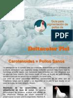 Pollos de Engorde - Guia Para Pigmentacion de Pollos de Engorde - Deltacolor Piel
