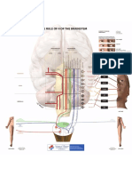 Rule of 4 Illustration Brainstem (LITFL)