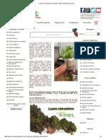 ¿Qué Es Hidroponía_ _ Sustratos _ Cultivo Hidropónico Casero