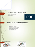 Músculos de Mano