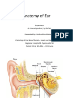 Anatomy of Ear.ppt