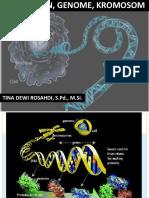 Gen Genome Kromosom