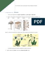 IV         FIZIOLOGIA PLANTELOR.docx