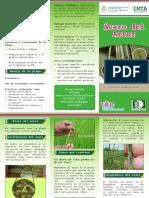 Ácaro del Arroz.pdf