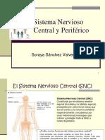 SN Soraya.pdf