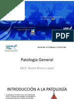 docencia patologia