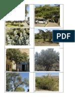 tecnología (arboles y arbustos)