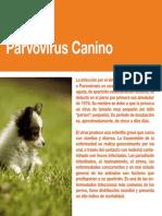 13-Parvovirus.pdf